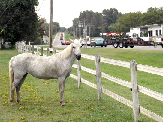 A horse on Peacetree Farm watches traffic drive by