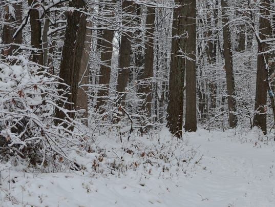 1-LBN-SUB-112215-Winter-woods.jpg