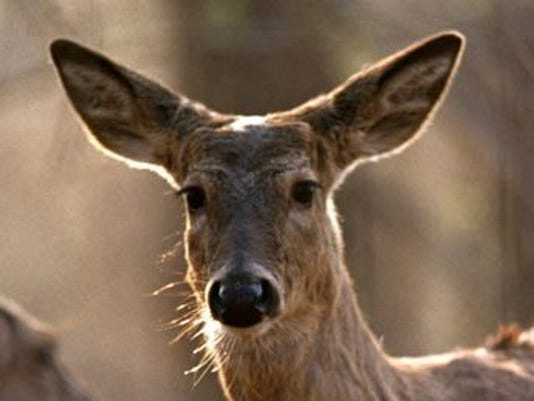 635907795817751302-deer.jpg