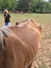 Workers with Redemption Road Rescue took photos of the horses after complaints were received.