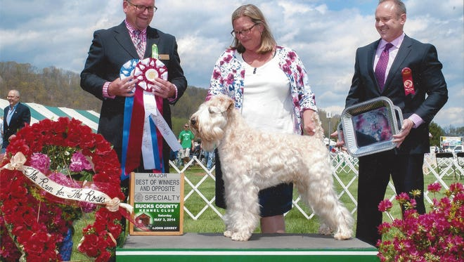 Kate Heller stands with her dog Dempsey after winning several awards, including Best of Opposite, at the 2014 Bucks County Kennel Club Run for the Roses.