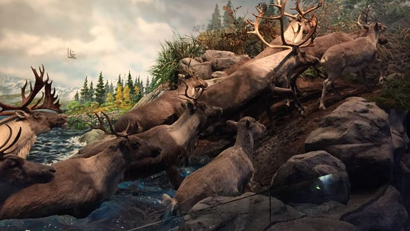 A caribou diorama at Wonders of Wildlife. Background