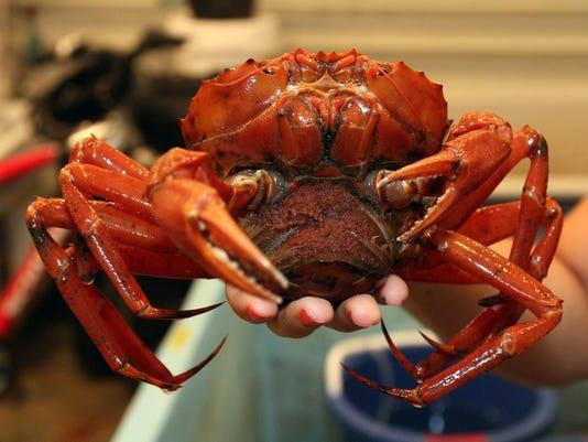 -crab0722c.jpg_20140722.jpg