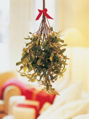 Mistletoe is a parasite but the kind used for Christmas