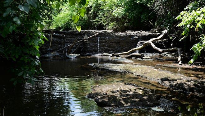 A dam tucked amongst the foliage behind the Edmondson Pike Branch library  is among the hundreds that obstruct creeks and streams across the county. A project to remove low-head dams could improve the water quality in the streams and make it easier for species such as the endangered Nashville crayfish to move freely upstream.