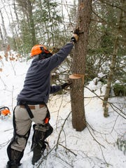 "Michigan Department of Natural Resources Biologist, Brian Piccolo, led a volunteer effort to improve snowshoe hare habitat in northwestern Crawford County as a part of the Michigan United Conservations Clubs' ""On the Ground"" program."