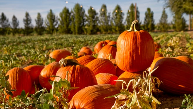 A corn maze, hayrides and chili are among the attractions. Schnepf Farms Pumpkin and Chili Festival in October.