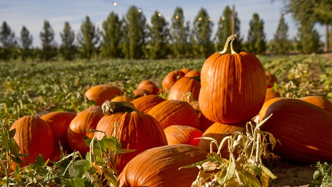 Schnepf Farms hosts the annual Pumpkin and Chili Festival throughout October.
