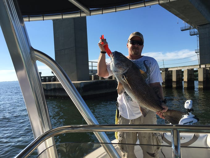 Ed Myers caught this 37-inch black drum at the Garcon