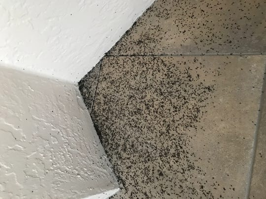Residents first began noticing the 'gnat invasion' last week, and many have said that the bothersome insects are especially prevalent on the island's beaches.
