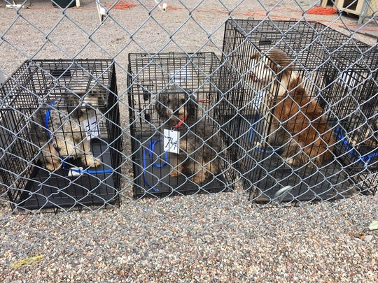 Seventy-four dogs were removed from a hoarding situation Wednesday in Wood County.