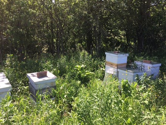 The bee hives at Golden Well Farm & Apiaries are away