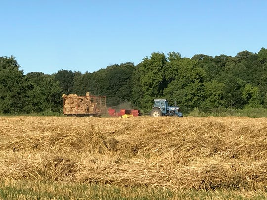 This tractor pulling a baler and wagon appear to be sailing on a golden sea of oat straw.