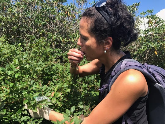 Outdoors writer Karen Chávez eats wild blueberries
