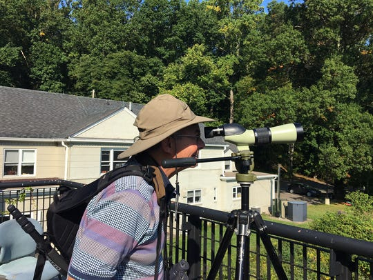 A spectator scouts for hawks on Sept. 16, 2017 during