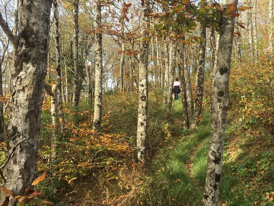 Even with sparse color in the Craggy Gardens area, the Mountains-to-Sea Trail is a great fall hike.