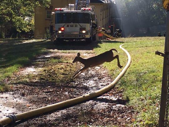 A deer runs through the fire scene at the vacant Villa