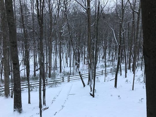 A shot of snowy woods in Candler on Wednesday, Jan.