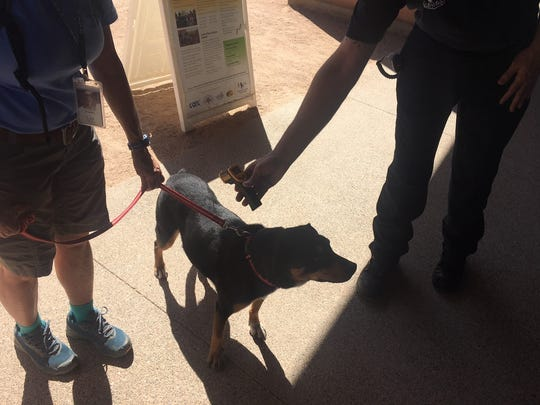 Officials use a heat radar to detect the temperature of a dog's coat.