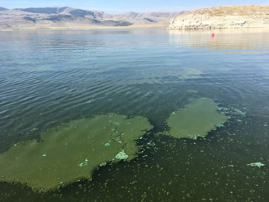 Last year 41 reports of harmful algae blooms were confirmed