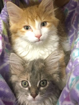The Nashville Humane Association is looking for adopters after rescuing 32 animals. There are discounts on dogs that are over 40 pounds and on kittens and cats.