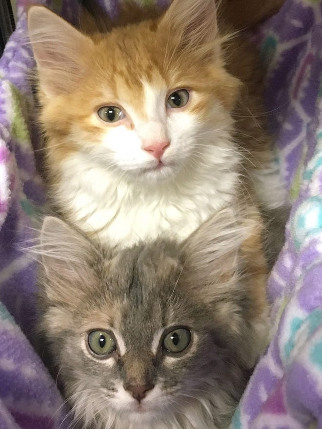Nashville Humane Association Looking For Adopters After 32 Animal Rescue