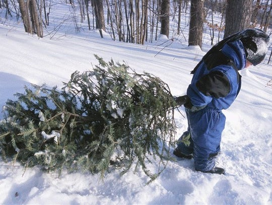 A child helps his family load up a Christmas tree cut