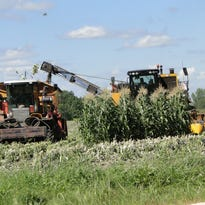 Sweet corn harvest is in full swing and production has been good with near-ideal conditions in southeastern Wisconsin near the Mayville Seneca Foods plant.