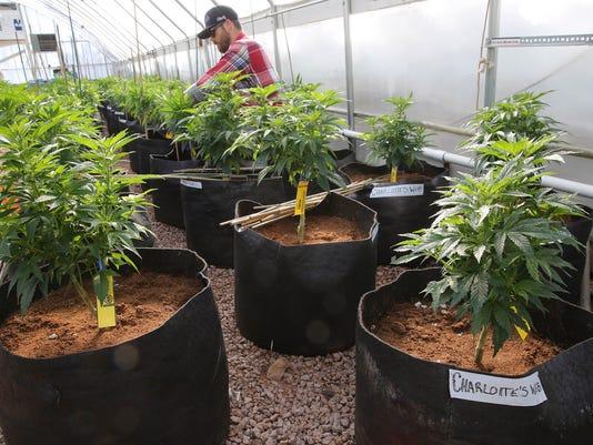 AP Medical Marijuana Kids