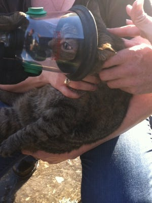 Firefighters saved one cat and three kittens in a West Des Moines house fire Monday afternoon.