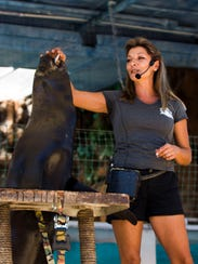 A trainer gives a sea lion a treat after a trick at