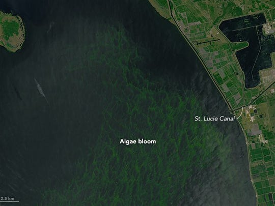 NASA Earth Observatory images of algae bloom on Lake Okeechobee on July 2, 2016. Landsat data from the U.S. Geological Survey.