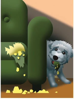 Illustration of a dog eating the stuffing out a couch.