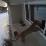 DNR confirms cougar seen in Brookfield