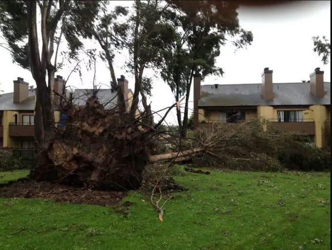 Los fuertes vientos causaron que árboles se cayeran.