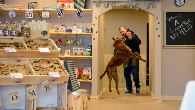 Emery, a Cheasapeake, jumps as Adam Dobbrastine, tries to keep a toy filled with treats away from him Thursday, Jan. 28, 2016 at Four Paws Dog Bakery he runs with his mother Robyn in East Lansing. The pet-friendly store opened in October and sells gourmet animal treats - cats too - and items.