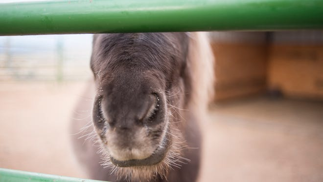 Far View Horse Rescue is one of more than 600 horse rescues across the United States positively impacted by the partnership.