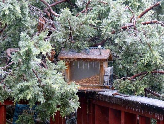 ice covered feeder