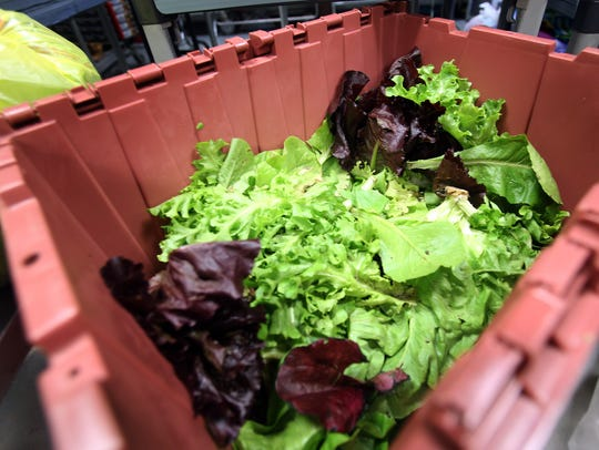 Lettuce donated from Tom Brizzolara's garden at People