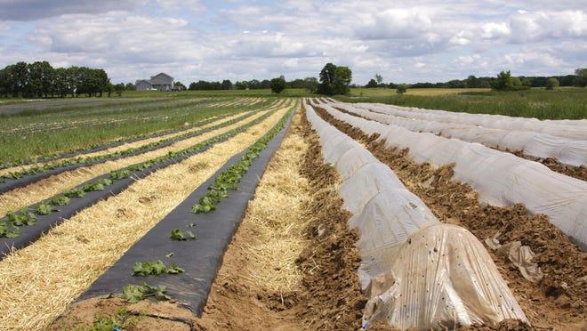 Svihel Vegetable Farm, 2013.