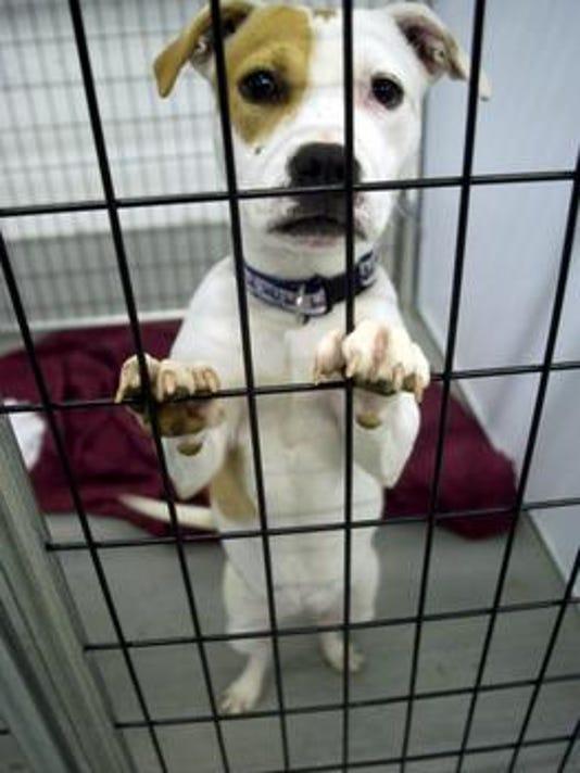 635981221914396474-dog-in-cage.jpg