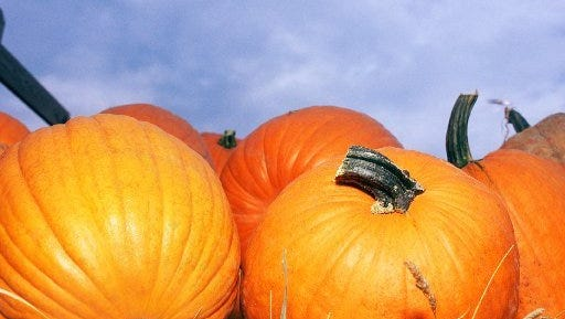 Pumpkin patches are set up at Christ by the Sea UMC and First Church of God, both in Vero Beach.