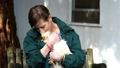 In this Nov. 6, 2014 photo, Megan Keller holds her endangered white sultan, Mr. Rooster, in her Cornelius backyard. Keller has gotten more than she bargained for from the fowl, who lives in her Cornelius backyard. Together with her husband, Dan, Keller has accumulated six noise citations in five months as a result of Mr. Rooster's crowing. At a hearing scheduled for Wednesday, Nov. 19, Dan and Megan Keller could be fined as much as $3,000.  Keller has outfitted the bird with a rooster collar, a snug-fitting band that restricts vocal cord movement and turns his crow into an elongated belch.    (AP Photo/The Oregonian,  Dillon Pilorget) MAGS OUT; TV OUT; NO LOCAL INTERNET; THE MERCURY OUT; WILLAMETTE WEEK OUT; PAMPLIN MEDIA GROUP OUT