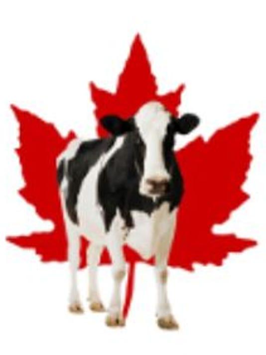 cow-maple-leaf.JPG