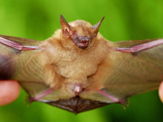 Decomposing bat found in prepackaged salad in Florida