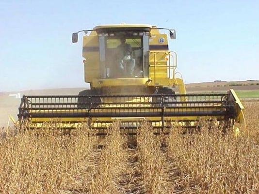 Soybean-harvest.JPG