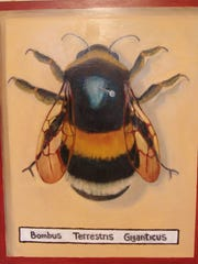 Giant Bumble Bee Specimen took first place in this year's Coshocton Art Prize.