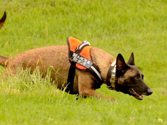 MAN n Rescue Dog Scout 01.jpg