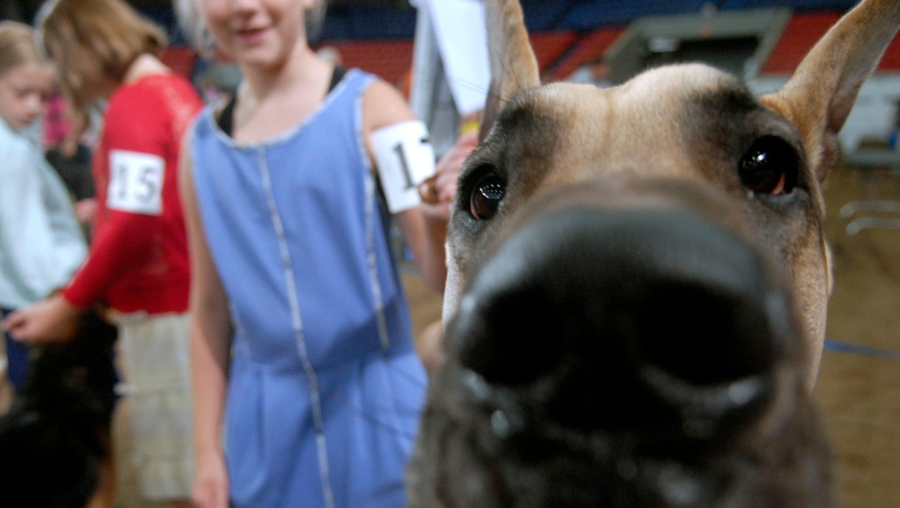 Kentucky State Fair Dog Show