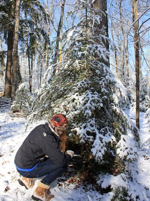 In 2016 across the U.S., 27.4 million real Christmas trees were sold.